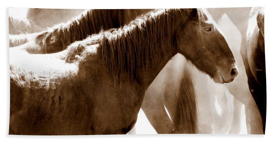 Wild Australian Horses Beach Towel featuring the photograph Wild Horses - Australian Brumbies 3 by Lexa Harpell