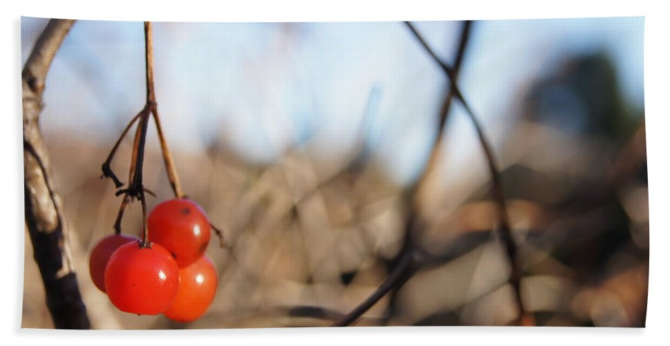Beach Towel featuring the photograph Automn Fruits by Line Gagne