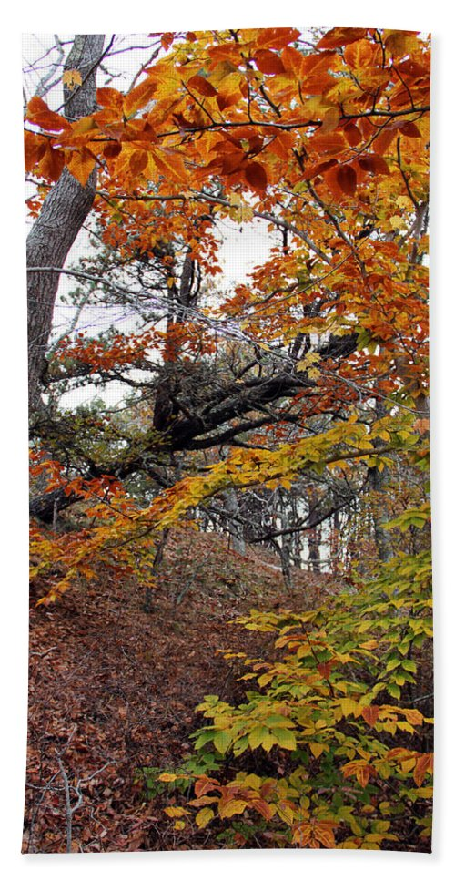 Photography Beach Towel featuring the photograph Autumn At Beech Forest by Steven Scanlon