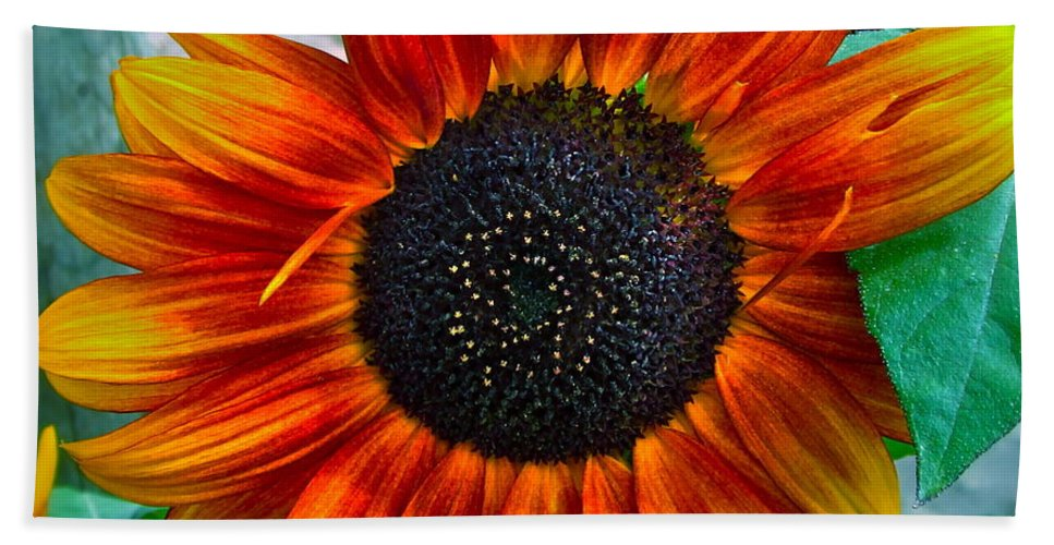 Sunflower Beach Sheet featuring the photograph Autumn Blessing by Gwyn Newcombe