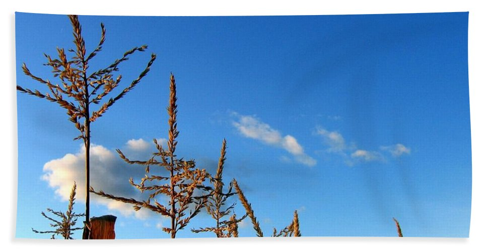Autumn Beach Towel featuring the photograph Autumn Corn by Will Borden