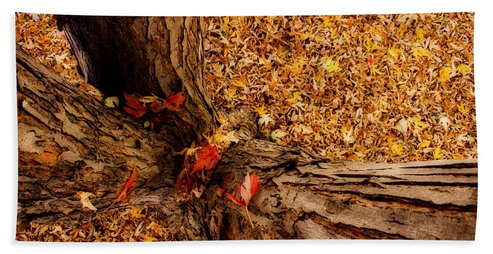 Maple Tree Beach Towel featuring the photograph Autumn Fall Dream by James BO Insogna
