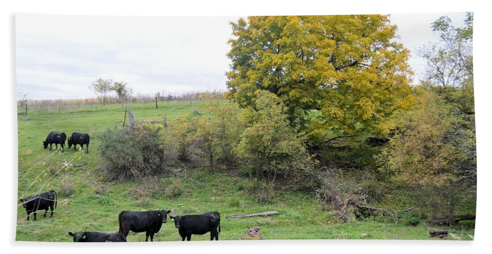 Herd Beach Towel featuring the photograph Autumn Herd by Bonfire Photography