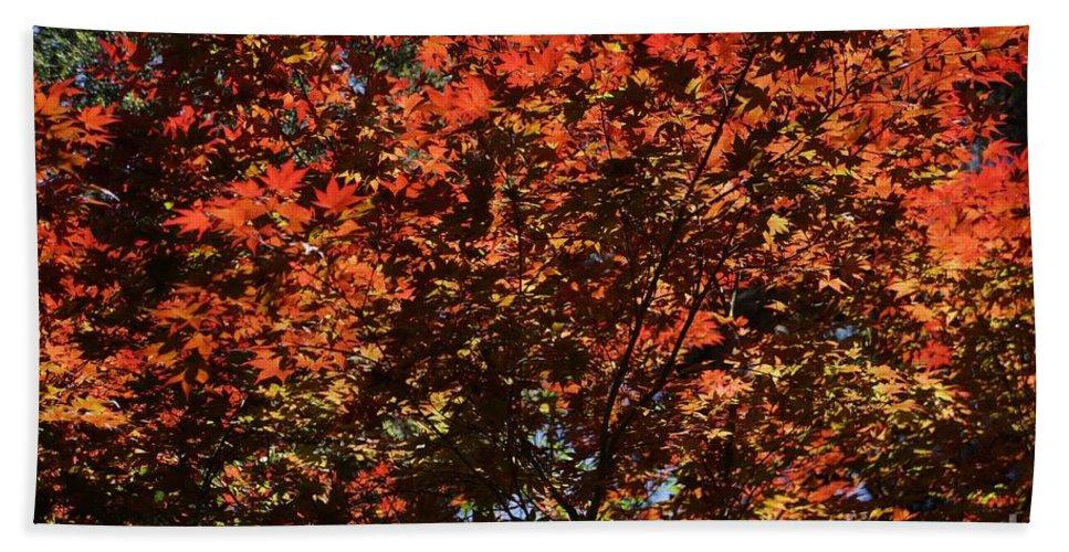 Autumn Beach Towel featuring the photograph Autumn Leaves by Dean Triolo