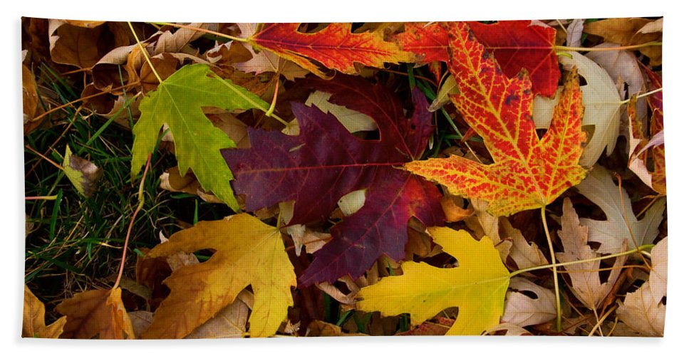 Leaves Beach Towel featuring the photograph Autumn Leaves by James BO Insogna