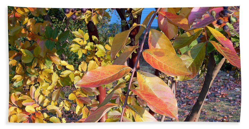 Fall Pictures Beach Towel featuring the photograph Autumn Leaves by Karin Dawn Kelshall- Best