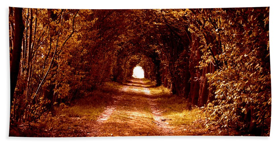Forest Red Yellow Wood Green Path Way Grass Tree Trees Fairy-tale Wizzard Texture Vintage Old Antic Leaf Leaves Focus Lonley Nature Park Mystic Mystical Art Light Autumn Life Symbol Indian Summer Beach Towel featuring the photograph Autumn Of Life by Steve K