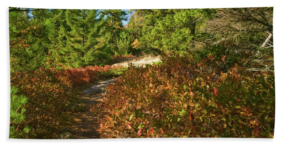 acadia National Park Beach Towel featuring the photograph Autumn Path by Paul Mangold