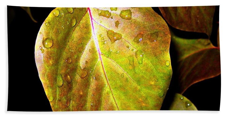 Autumn Beach Towel featuring the photograph Autumn Rain by Will Borden