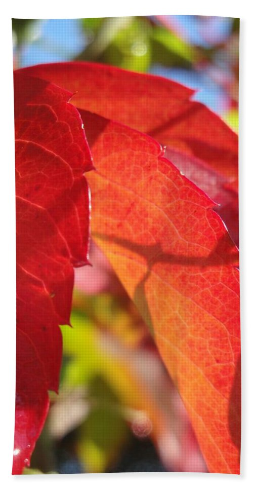 Autumn Beach Towel featuring the photograph Autumn Reds by Susan Baker
