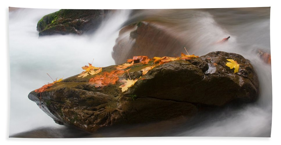 Leaves Beach Towel featuring the photograph Autumn Resting Place by Mike Dawson