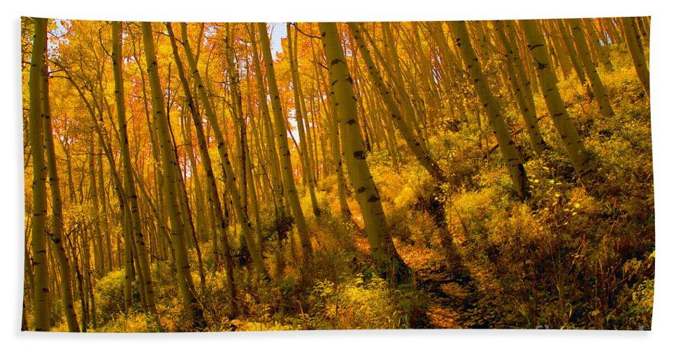 Autumn Beach Towel featuring the photograph Autumn Trail by David Lee Thompson