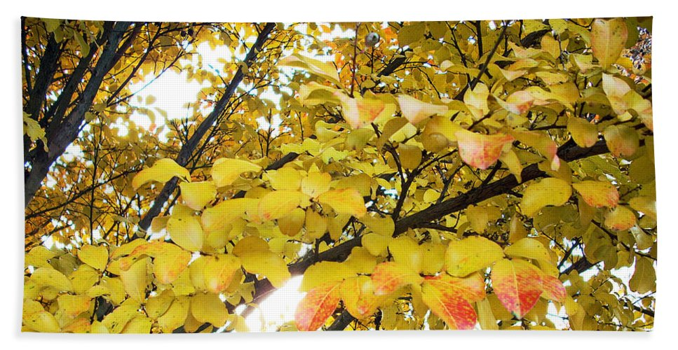 Fall Pictures Beach Towel featuring the photograph Autumns Gold by Karin Dawn Kelshall- Best