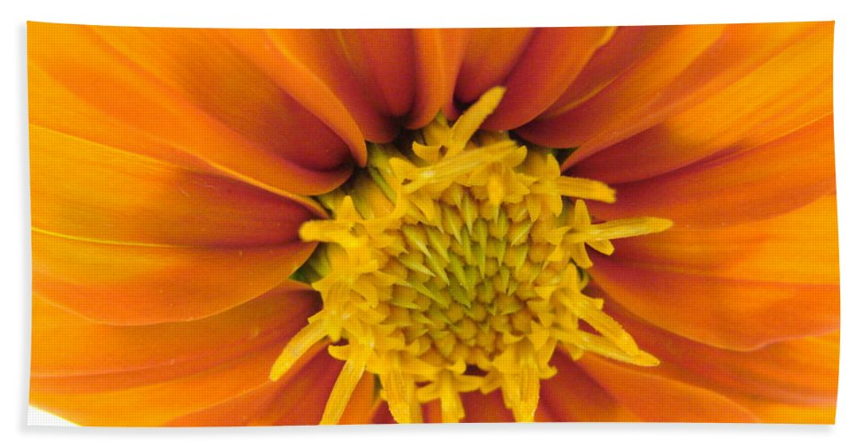 Orange Beach Towel featuring the photograph Awesome Blossom by Mary Halpin