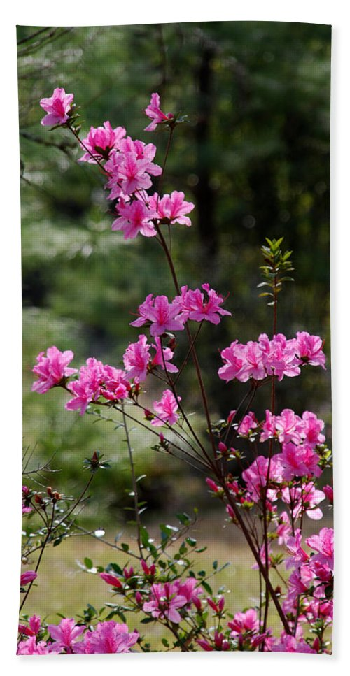 Spring Flower Beach Towel featuring the photograph Azaleas II by Susanne Van Hulst
