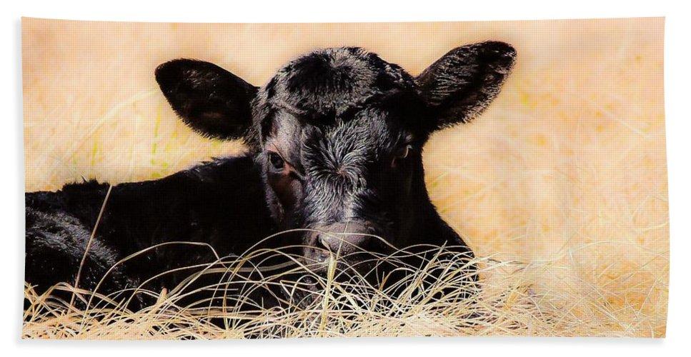 Angus Beach Towel featuring the photograph Baby Angus Calf by Jeanie Mann