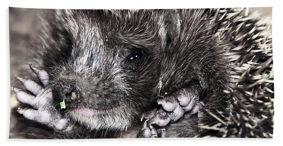 Animal Beach Towel featuring the photograph Baby Hedgehog by Svetlana Sewell