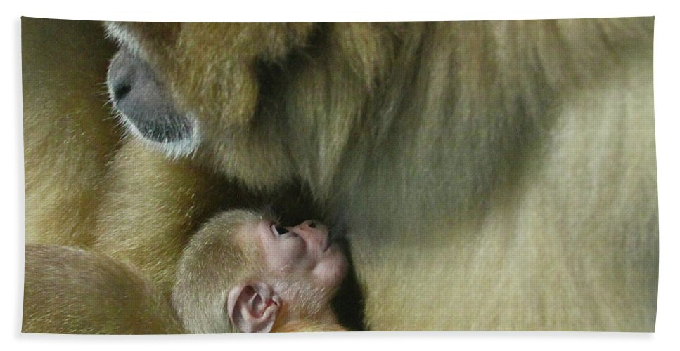 Monkey Beach Towel featuring the photograph Baby Monkey by Rick Monyahan