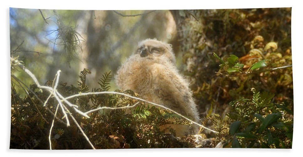Great Horned Owl Beach Towel featuring the photograph Baby Owl Sleeping by David Lee Thompson