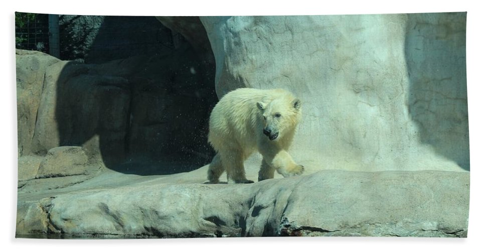 Polar Beach Towel featuring the photograph Baby Polar Bear by Michiale Schneider