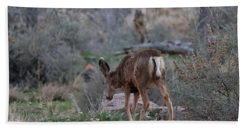 Deer Beach Towel featuring the photograph Back Into The Woods - 2 by Christy Pooschke