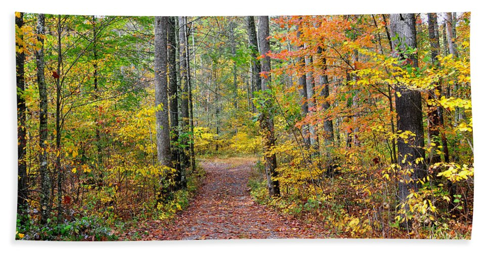 Woods Beach Towel featuring the photograph Back Woods by Todd Hostetter