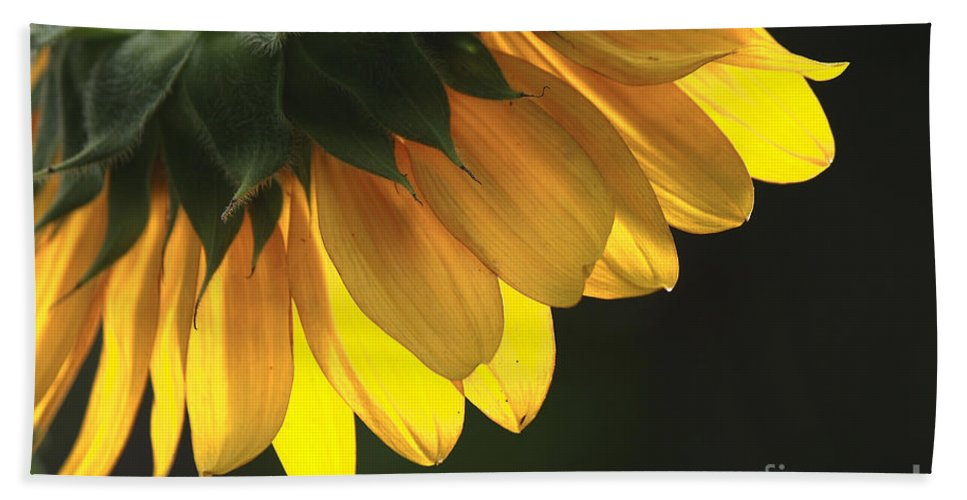 Sunflower Beach Towel featuring the photograph Backside by Sari Sauls