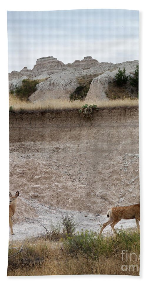 Badlands Beach Towel featuring the photograph Badlands Deer Sd by Tommy Anderson