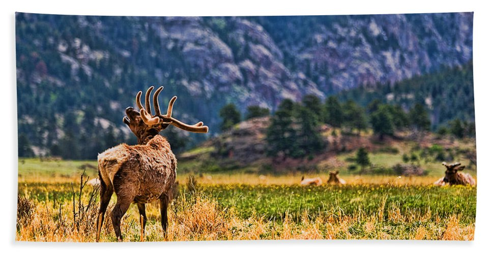 Badlands Beach Towel featuring the photograph Badlands Elk by Tommy Anderson