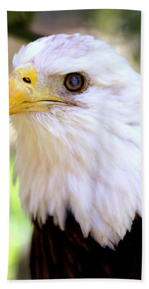 Bald Eagle Beach Towel featuring the photograph Bald Eagle 1 by Imagery-at- Work