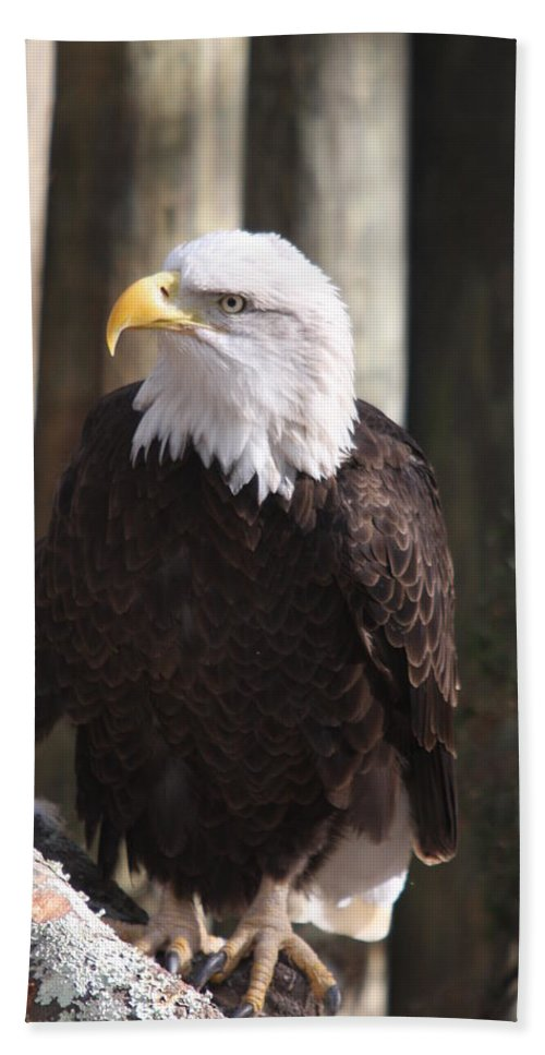 Eagle Beach Towel featuring the photograph Bald Eagle by Christiane Schulze Art And Photography