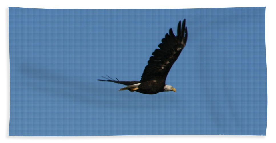 Bald Eagle Beach Towel featuring the photograph Bald Eagle Flight by Neal Eslinger