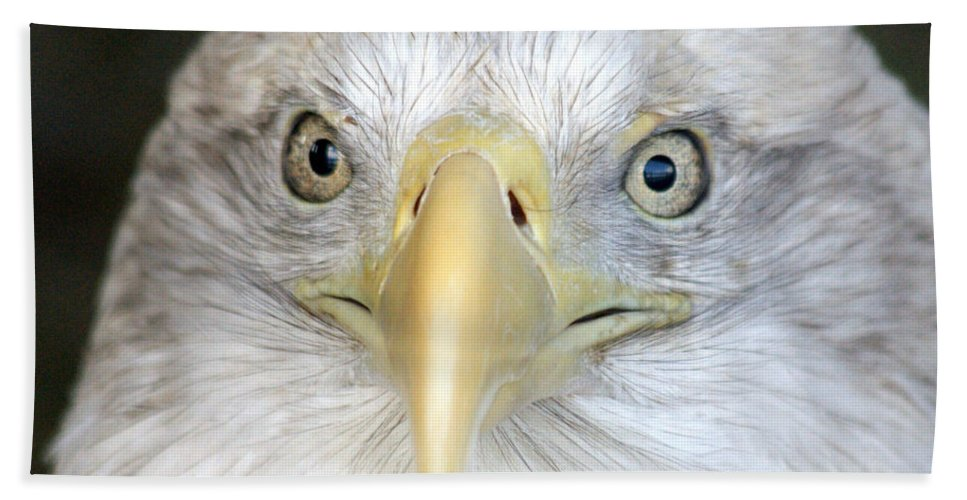 Bald Eagle Beach Towel featuring the photograph Bald Eagle Up Close by Larry Allan