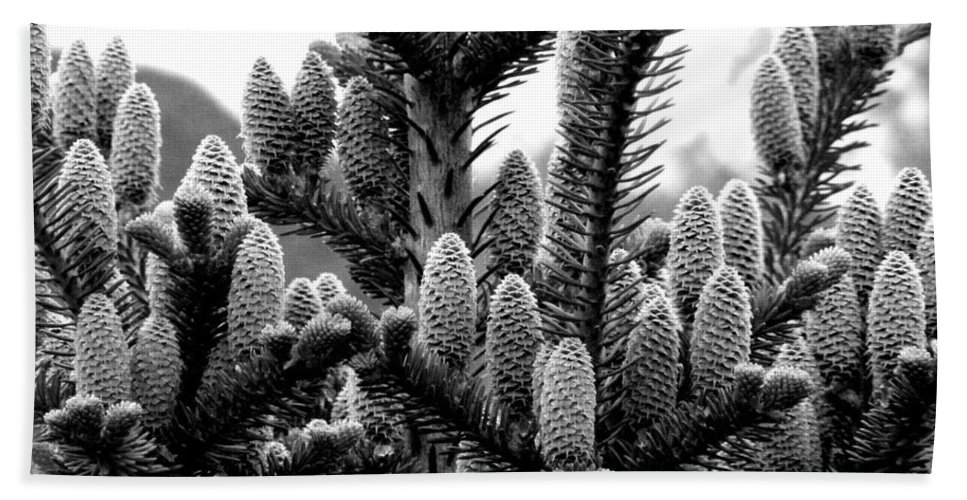 Black And White Photography Beach Towel featuring the digital art Balsam Fir Buds Bw by Barbara Griffin