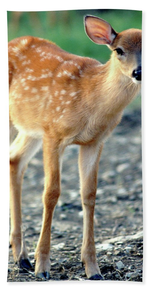 Faunagraphs Beach Towel featuring the photograph Bambi2 by Torie Tiffany