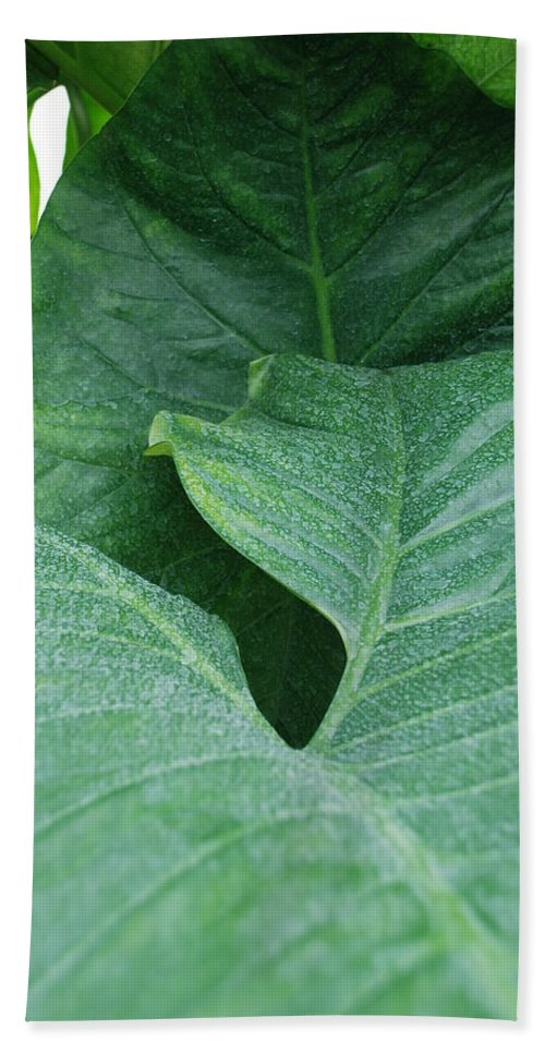 Macro Beach Towel featuring the photograph Banana Leaves by Rob Hans