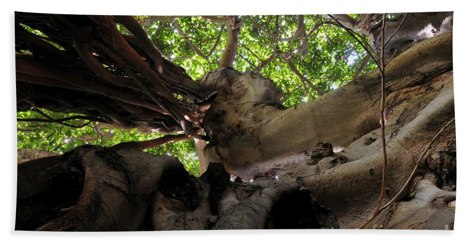 Banyan Tree Beach Towel featuring the photograph Banyan Sky by David Lee Thompson