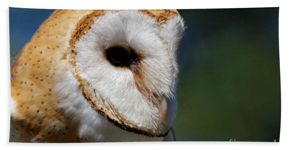 Barn Owl Beach Towel featuring the photograph Barn Owl - Intensity by Sue Harper