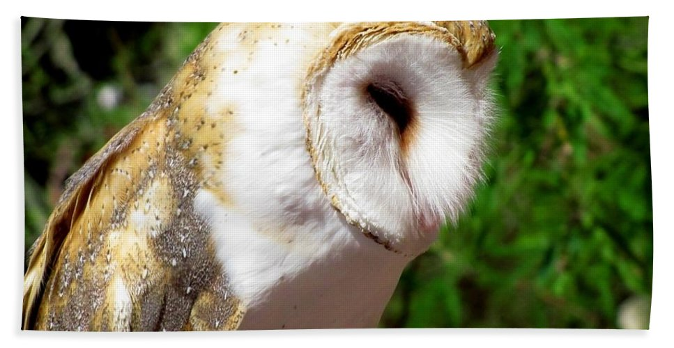 Owls Beach Towel featuring the photograph Barn Owl by Marilyn Smith