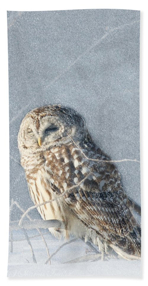 Maine Wildlife Beach Towel featuring the photograph Barred Owl In The Snowstorm by Sharon Fiedler