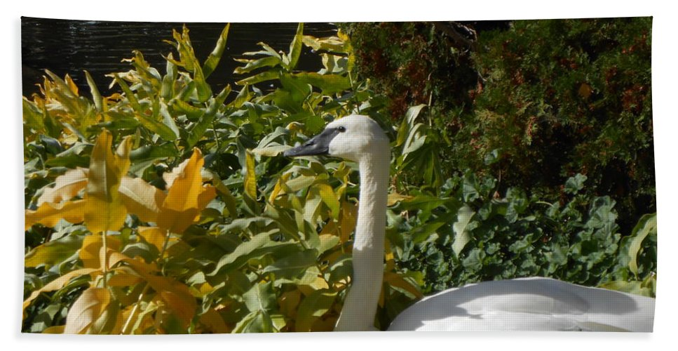 Swan Beach Towel featuring the photograph Basking By The Pond by LKB Art and Photography