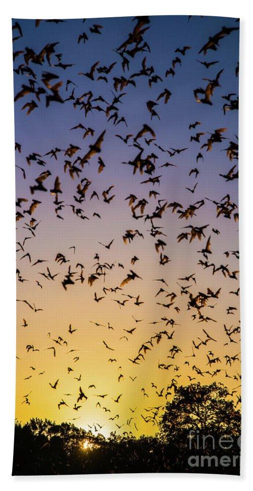 Bats Beach Sheet featuring the photograph Bats At Bracken Cave by Michael Tidwell