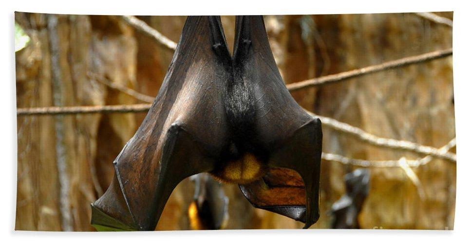 Bats Beach Sheet featuring the photograph Bats by David Lee Thompson