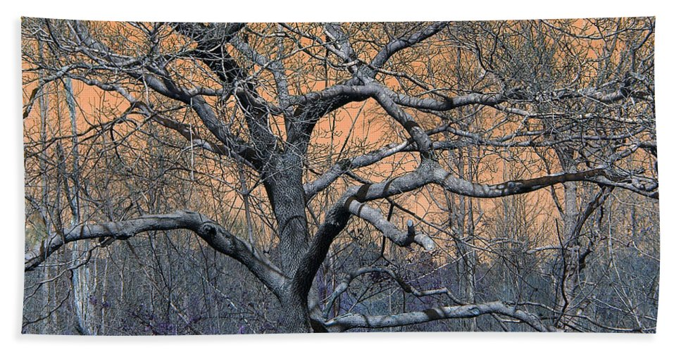 Trees Tree Woods Nature Outdoors Plants Beach Towel featuring the photograph Bb's Tree 2 by Lisa Stanley