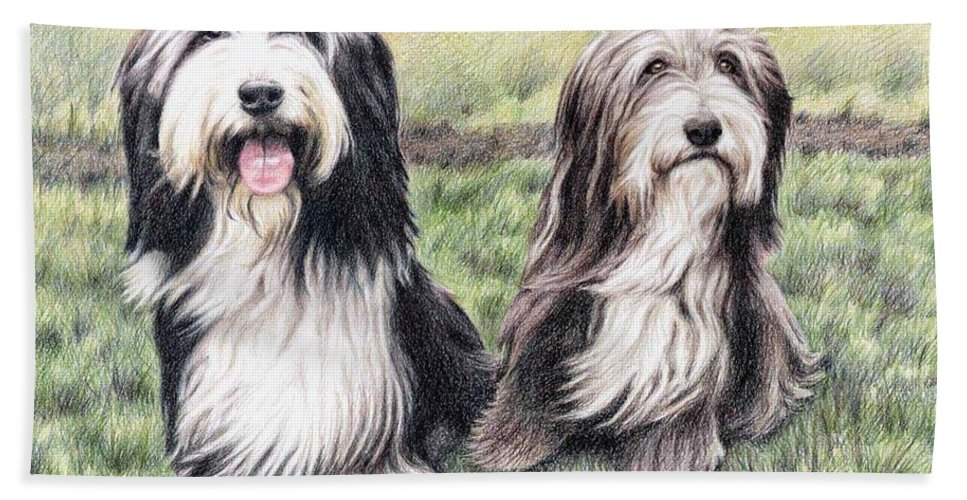 Dogs Beach Sheet featuring the drawing Bearded Collies by Nicole Zeug