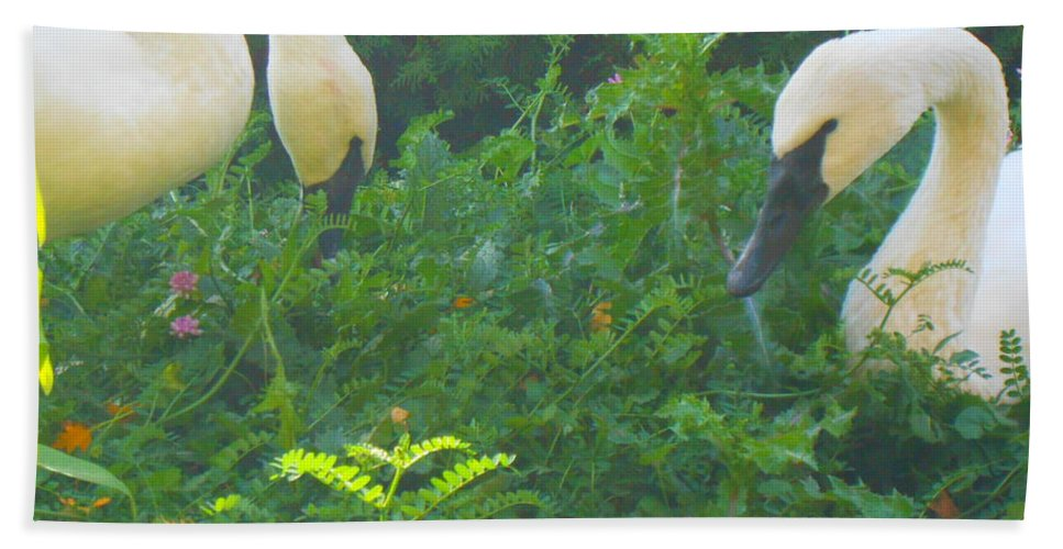Trumpeter Swan Beach Towel featuring the photograph Beautiful Duo by LKB Art and Photography