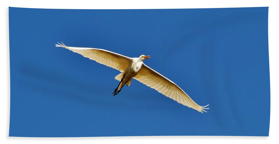 Heron Beach Towel featuring the photograph Beautiful Heron by Eileen Brymer