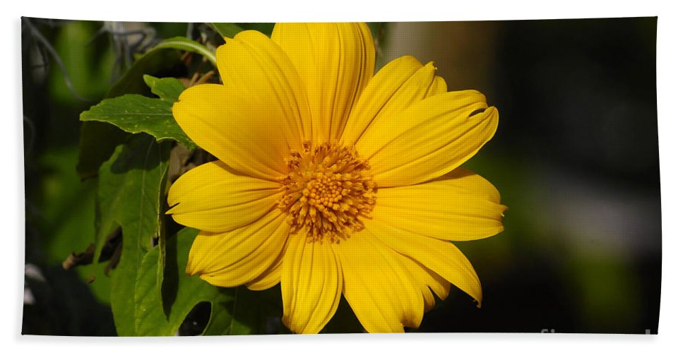 Yellow Beach Towel featuring the photograph Beautiful In Yellow by David Lee Thompson