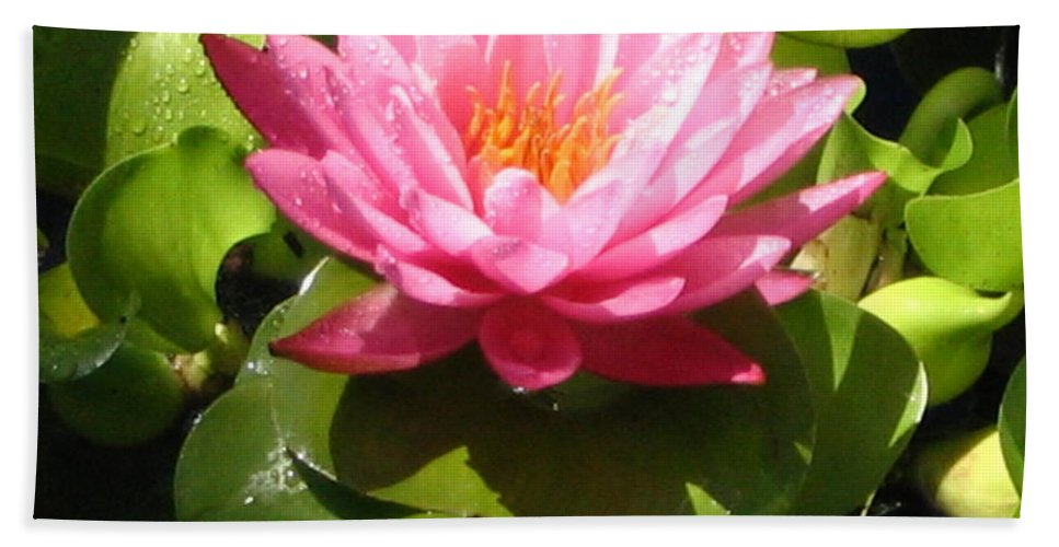 Nature Beach Towel featuring the photograph Beautiful by Line Gagne