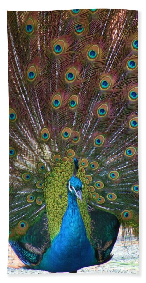 Peacock Beach Towel featuring the photograph Beautiful Peacock by Tina Meador